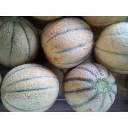 Cantalupo (melone retato)