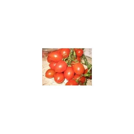 Pomodoro per salsa piccadilly bio