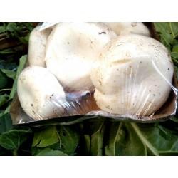 Funghi champignon bio (vaschetta)