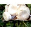 Funghi champignon (vaschetta)