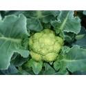 Cavolfiore verde (broccolo)