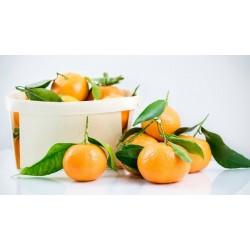 Marmellata di clementine BIO