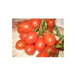 Pomodoro piccadilly bio